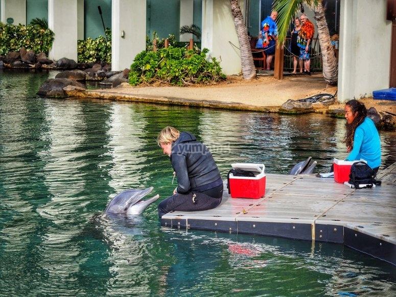 Dando de comer al delfín