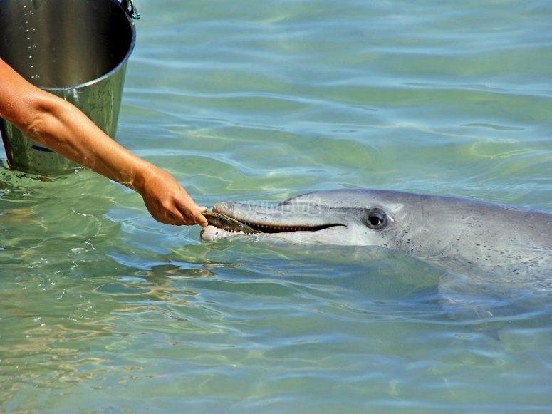 Delfín comiendo