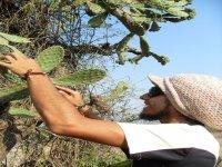 Végétation à Morelia