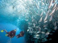 Maravillas del oceano