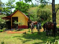 Cabins and horses