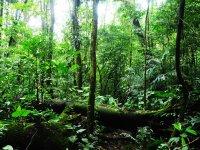 Reserve vegetation