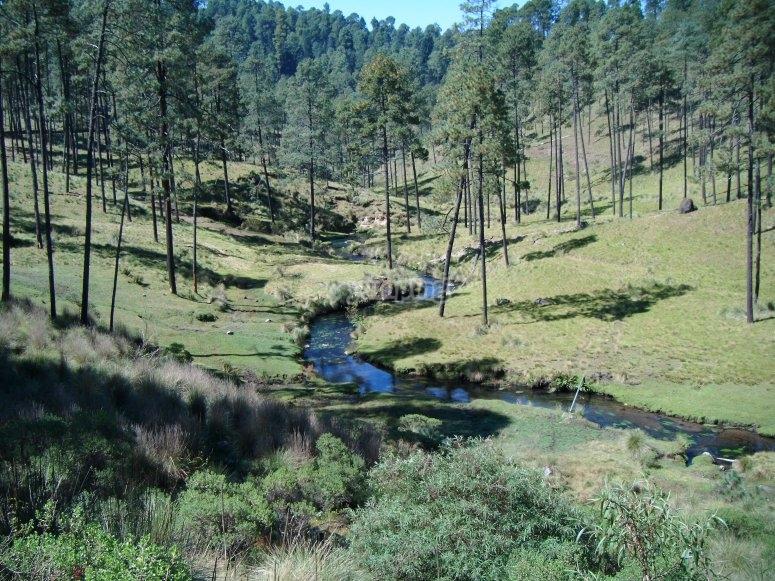 Rios y bosques
