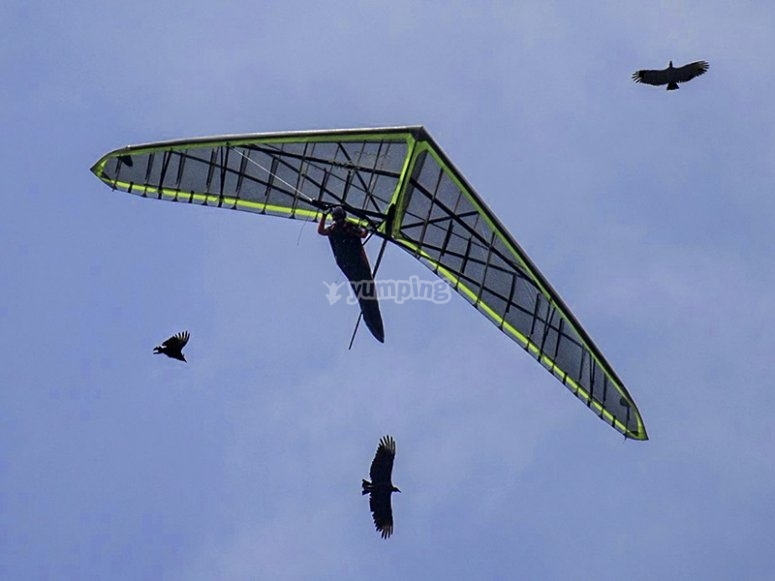 Specialized personnel to teach the best maneuvers in the air