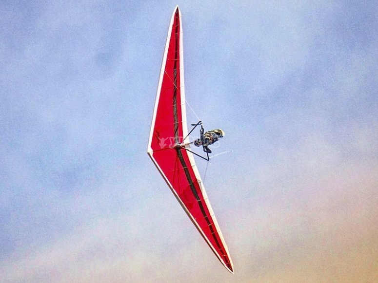 Learn to Fly with a Delta Wing