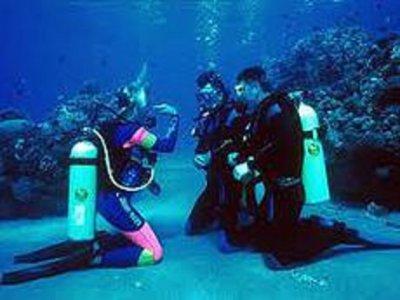 Excursión de buceo en arrecifes de coral Tulum