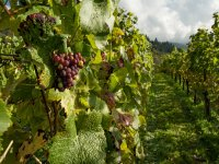 Meet the vineyards of the Cheese and Wine Route