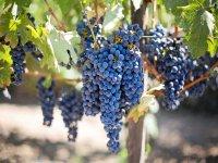 Tour the best vineyards