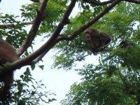 Visita a la isla de los macacos