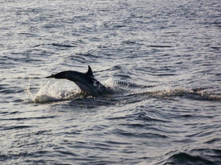 cola de delfin
