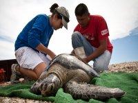 Ayudando a las tortugas