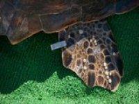Estudiando a las tortugas