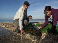 Encontrar las tortugas
