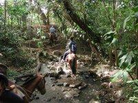 paseo a caballo en el bosque