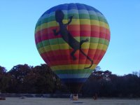 balloon lizard