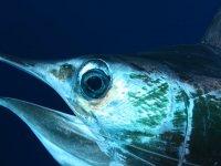 PEsca en la Baja