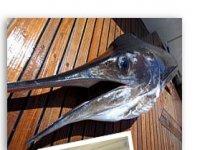 Pescar en Los Cabos