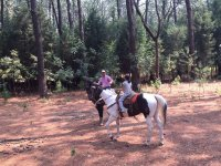 We will explain all the benefits of living with horses