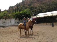Discover the advantages of equine therapy