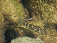 Especies de peces
