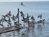 Fauna en el mar