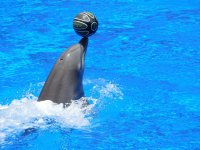 Football with dolphins