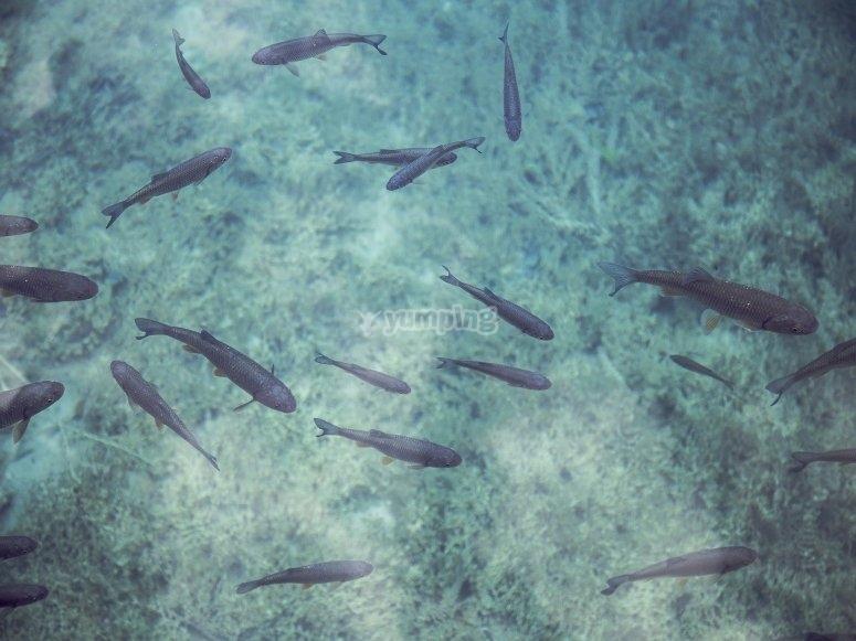 Arrecifes de Huatulco
