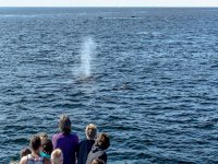 whale watching from the boat