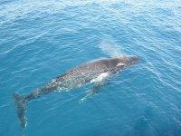 whales in the ocean