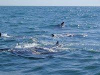 Delfines en paseo en barco