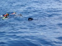 Snorkel en el caribe