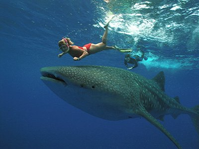 Cancun Whale Shark Tours Paseos en Barco