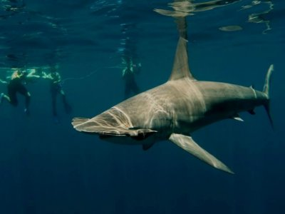 Shark Encounters Mexico