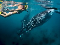 NOTHING WITH WHALE SHARK