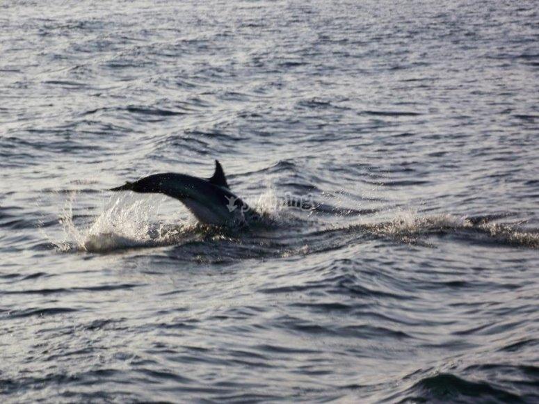 mancha de Delfines en trayecto.