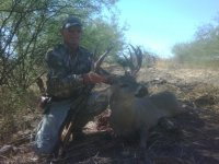 Sound coues
