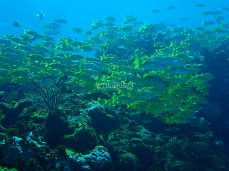 Also enjoy the marine life of Cancun