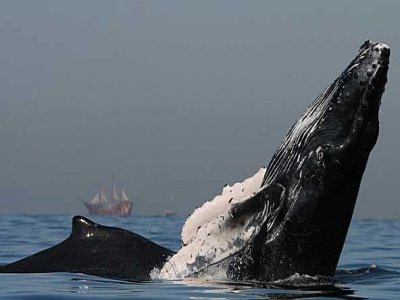 Vallarta Whales