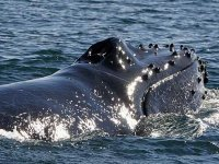 Observacion de ballenas