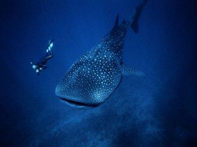Holbox Travel Snorkel
