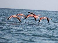 Famingos flying