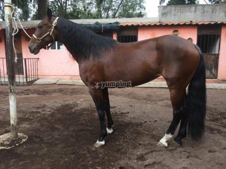 Lindo caballo