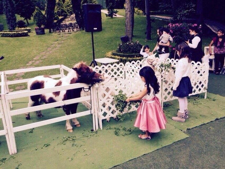 Little one with the pony