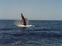 Whale flip