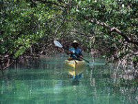 Paseo por manglares