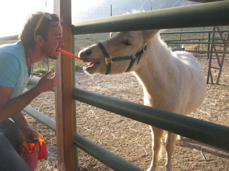 Alimentando a los animales