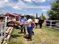Children's party at Puebla educational farm