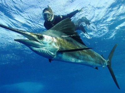 Keen M International Snorkel