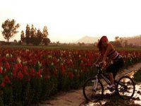 Cholula Bike