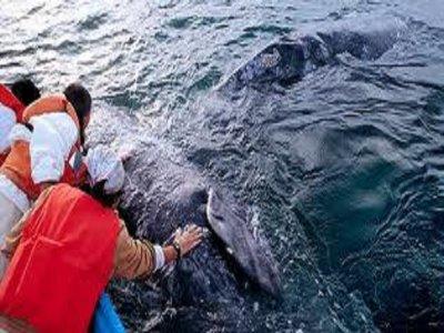 Paseos Turísticos Anayansi Whale Watching